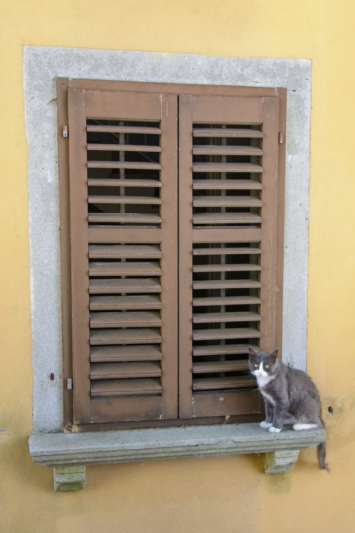 katt i labin