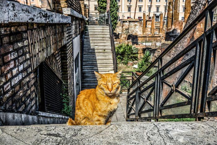 torre argentina pixabay Resor med tema - Katter
