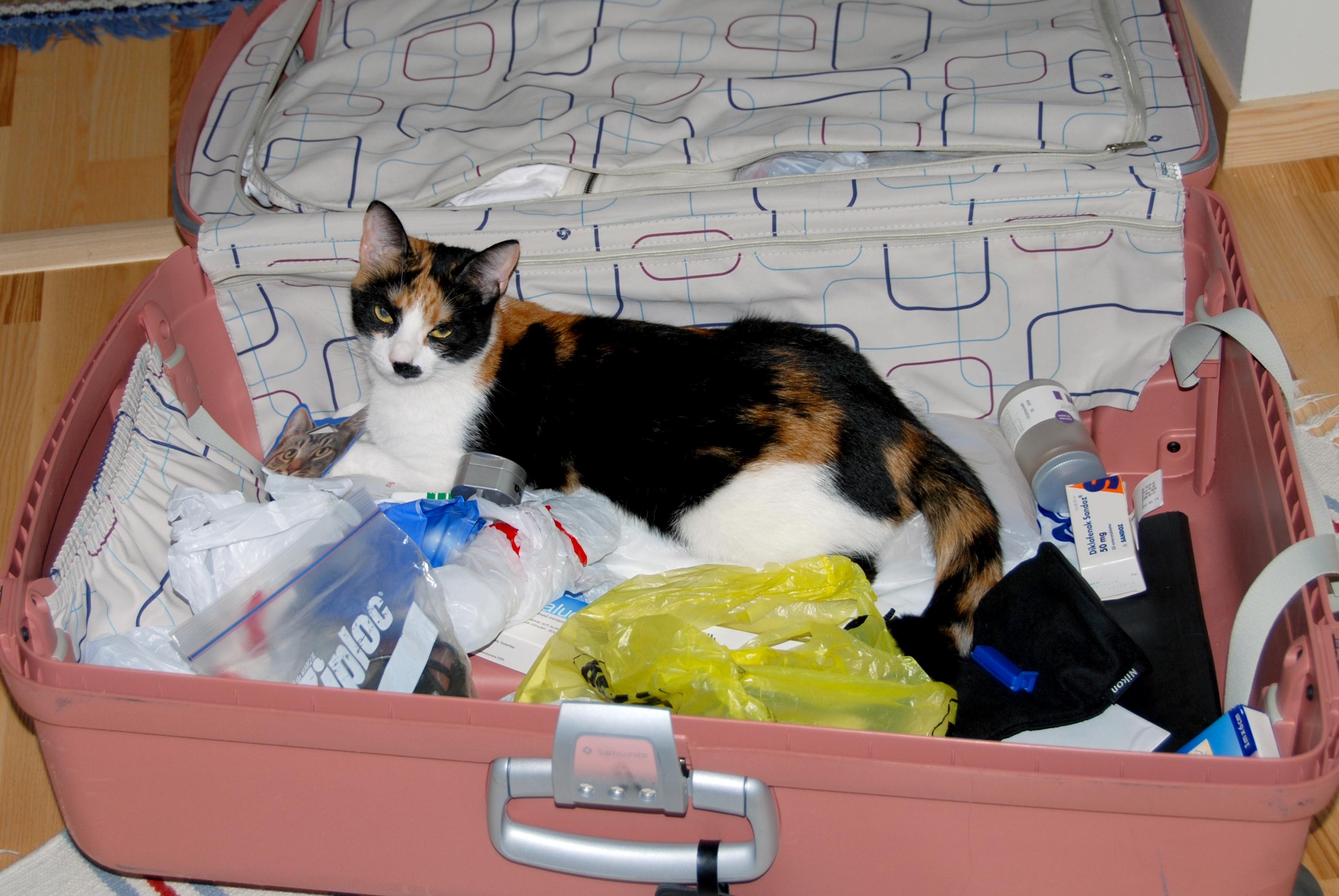 Att resa bort när man har katt