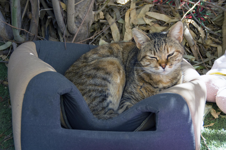katt i cat village