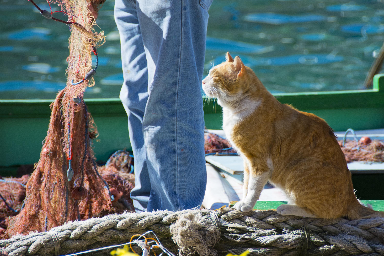 katterna på malta
