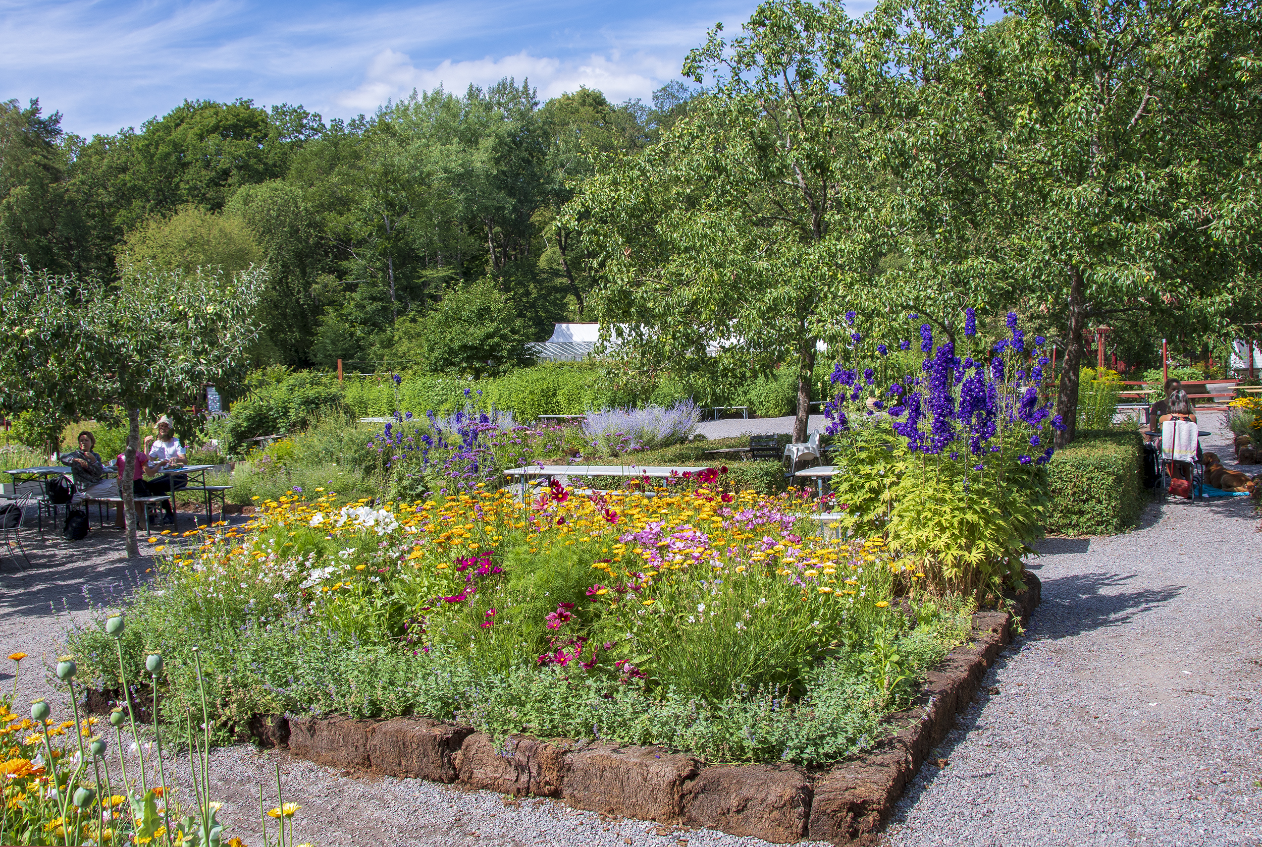vintervikens trädgård blommor