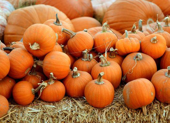 Thanksgiving i USA