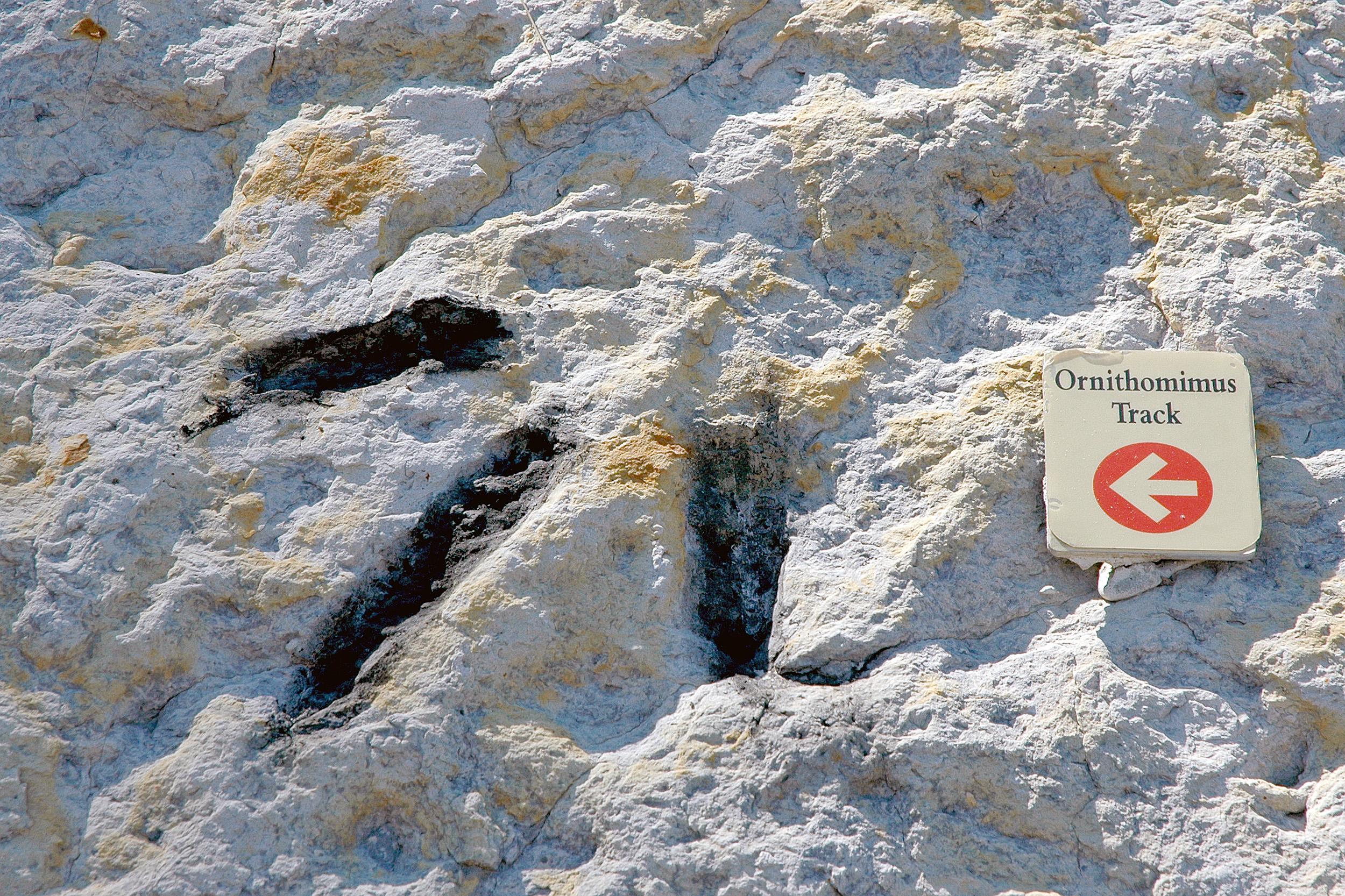 Ornithomimus Dinosaur Ridge denver colorado
