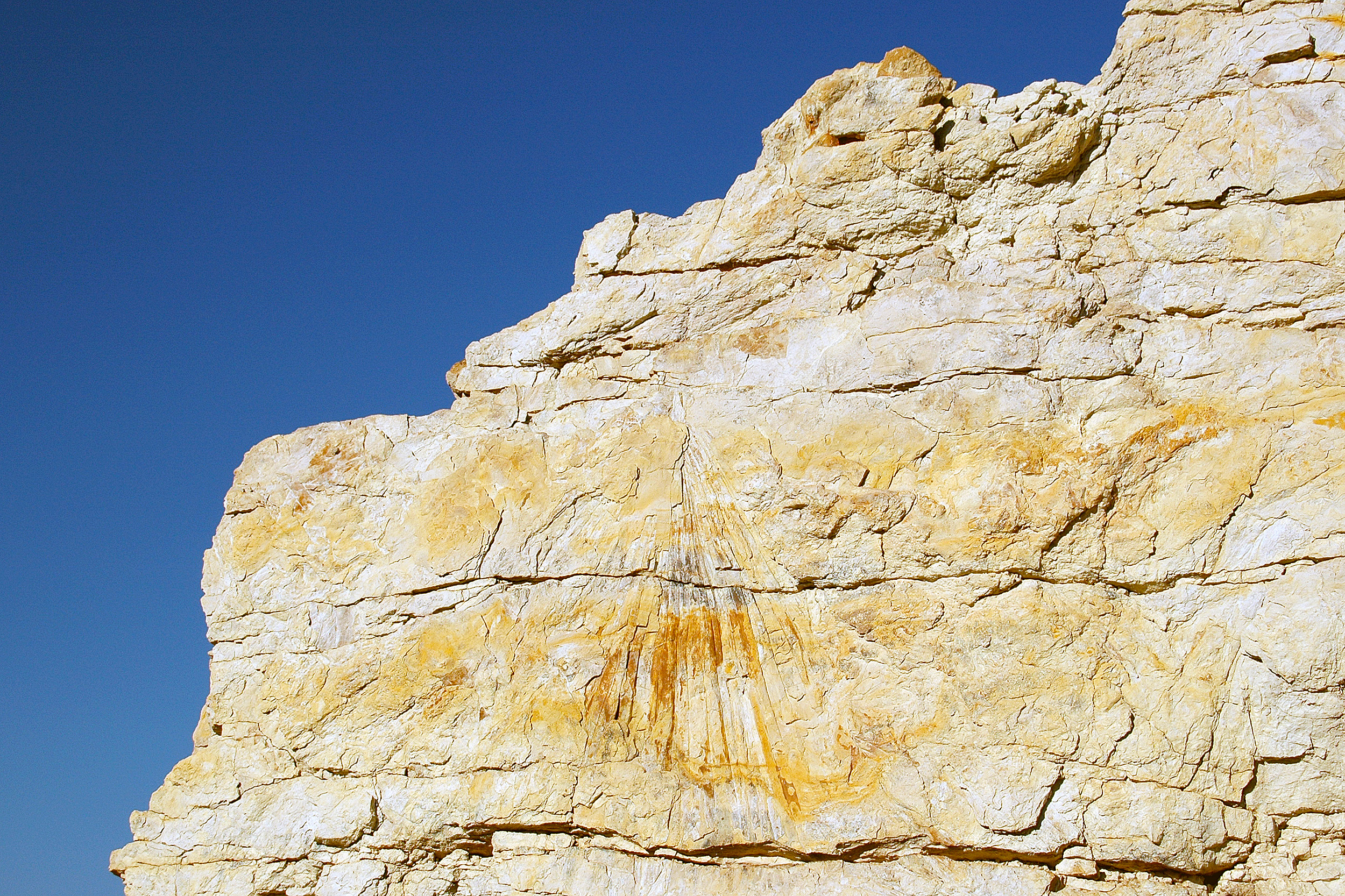 Palmblad Dinosaur Ridge Denver Morrison Colorado