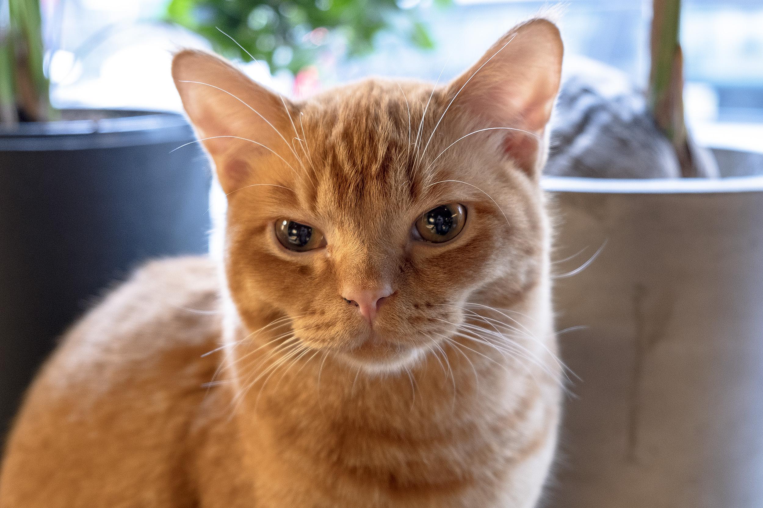 Java Whiskers Kattcafé Birk