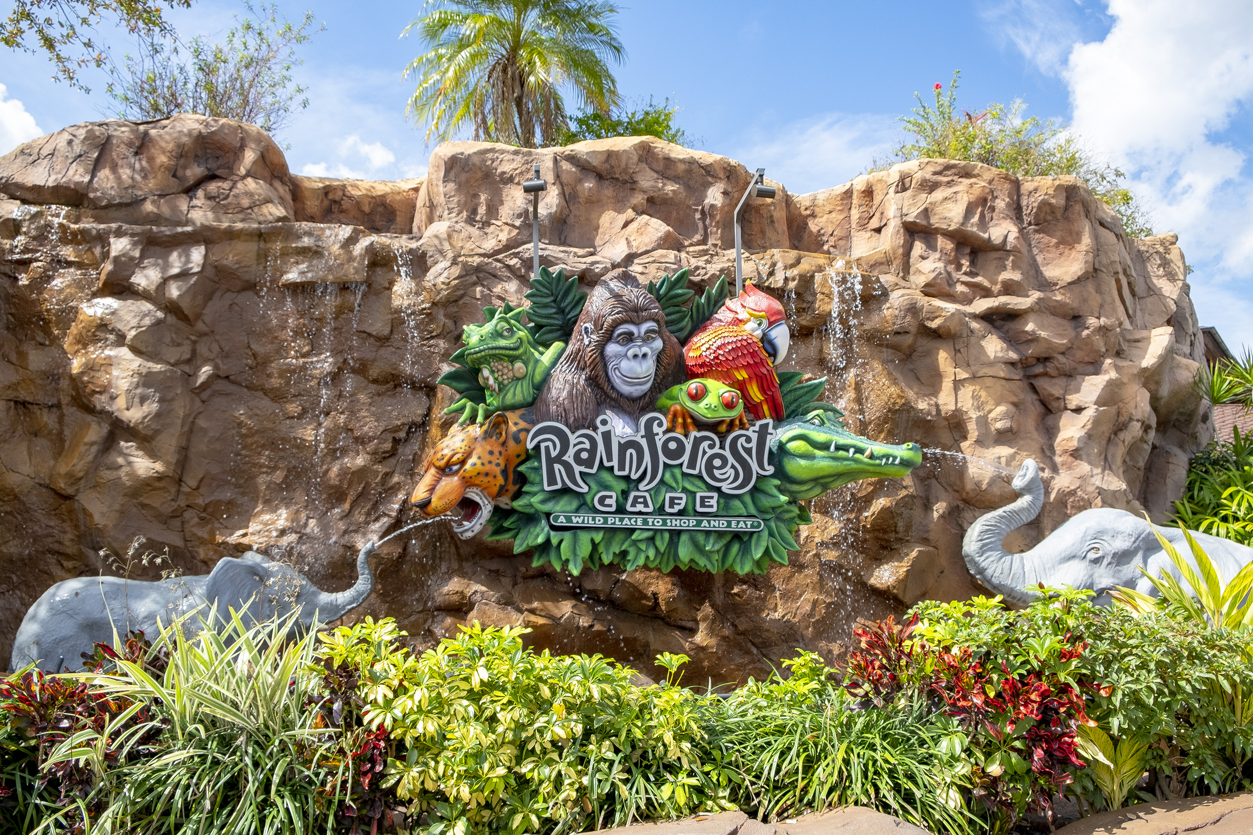 Disney Springs Rainforest cafe