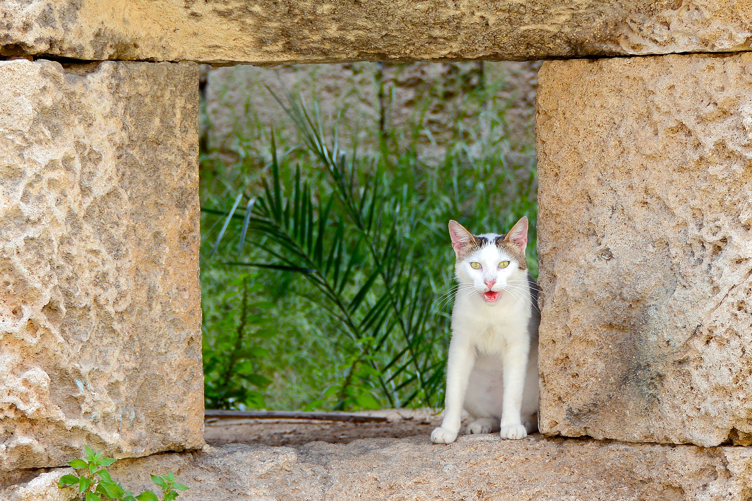 Internationella kattdagen, Rhodos gamla stad, grekland