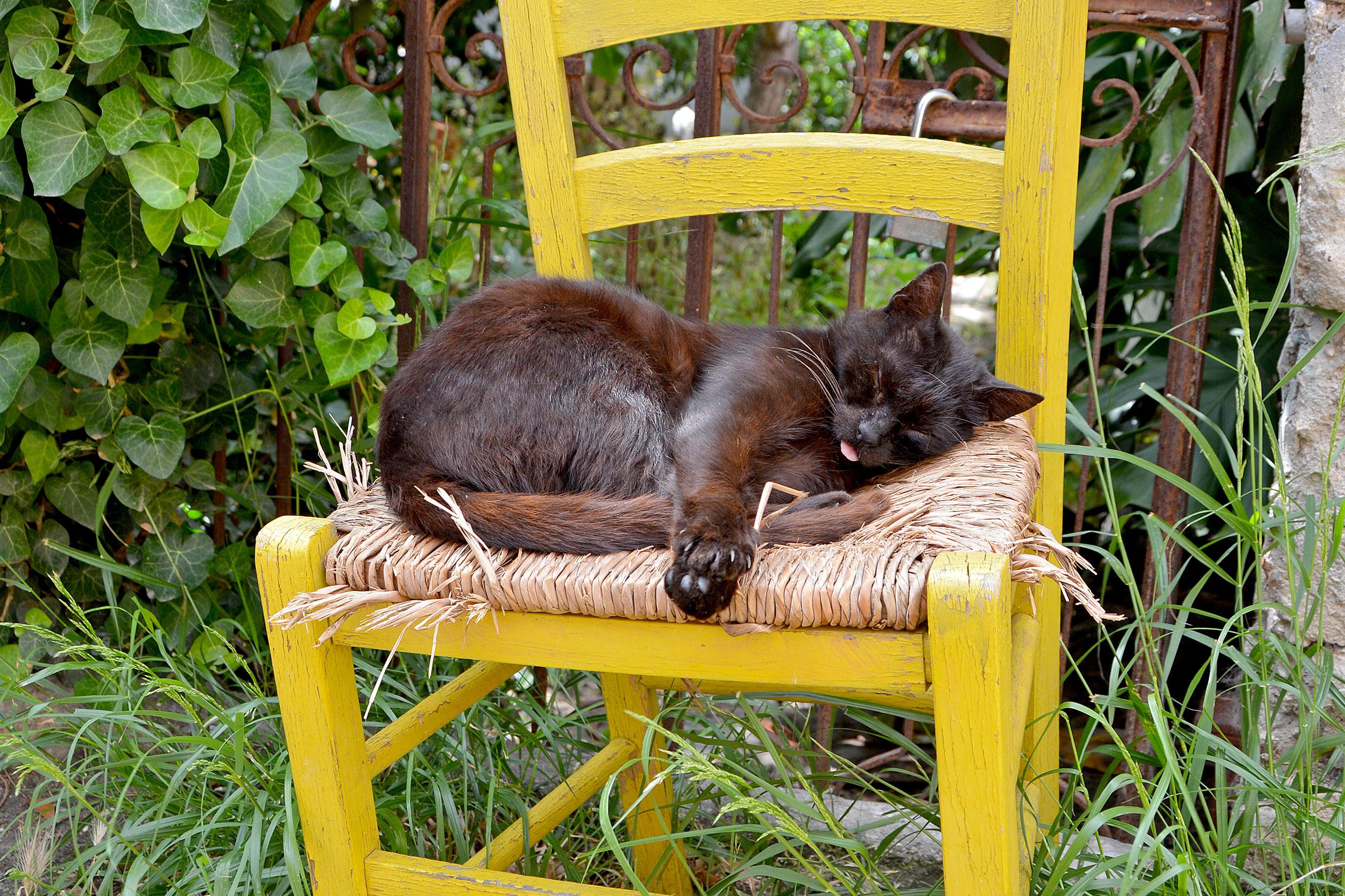 Katt Rhodos Grekland