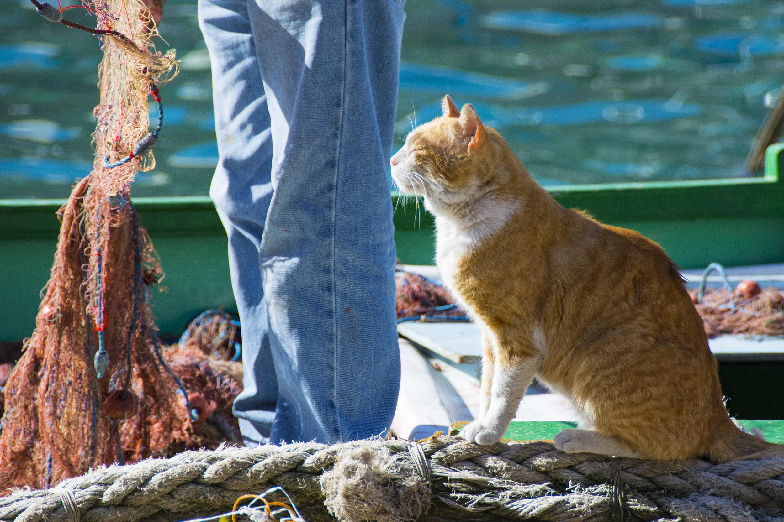 Katt St. Julians. Malta.