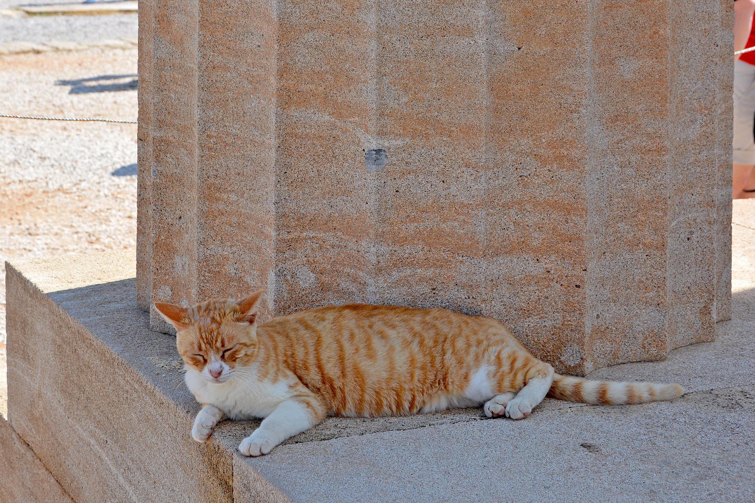 Katt i Lindos på Rhodos, Grekland
