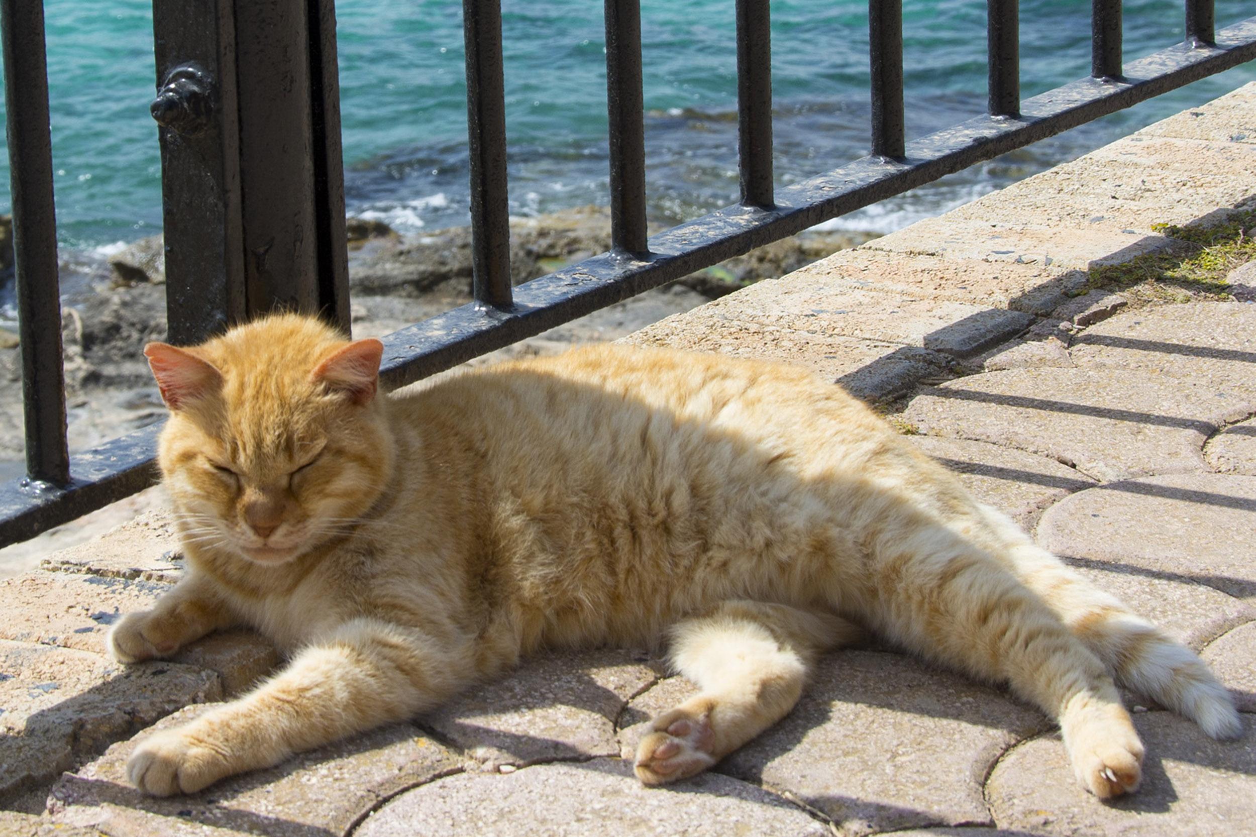 Internationella kattdagen, Sliema, Malta