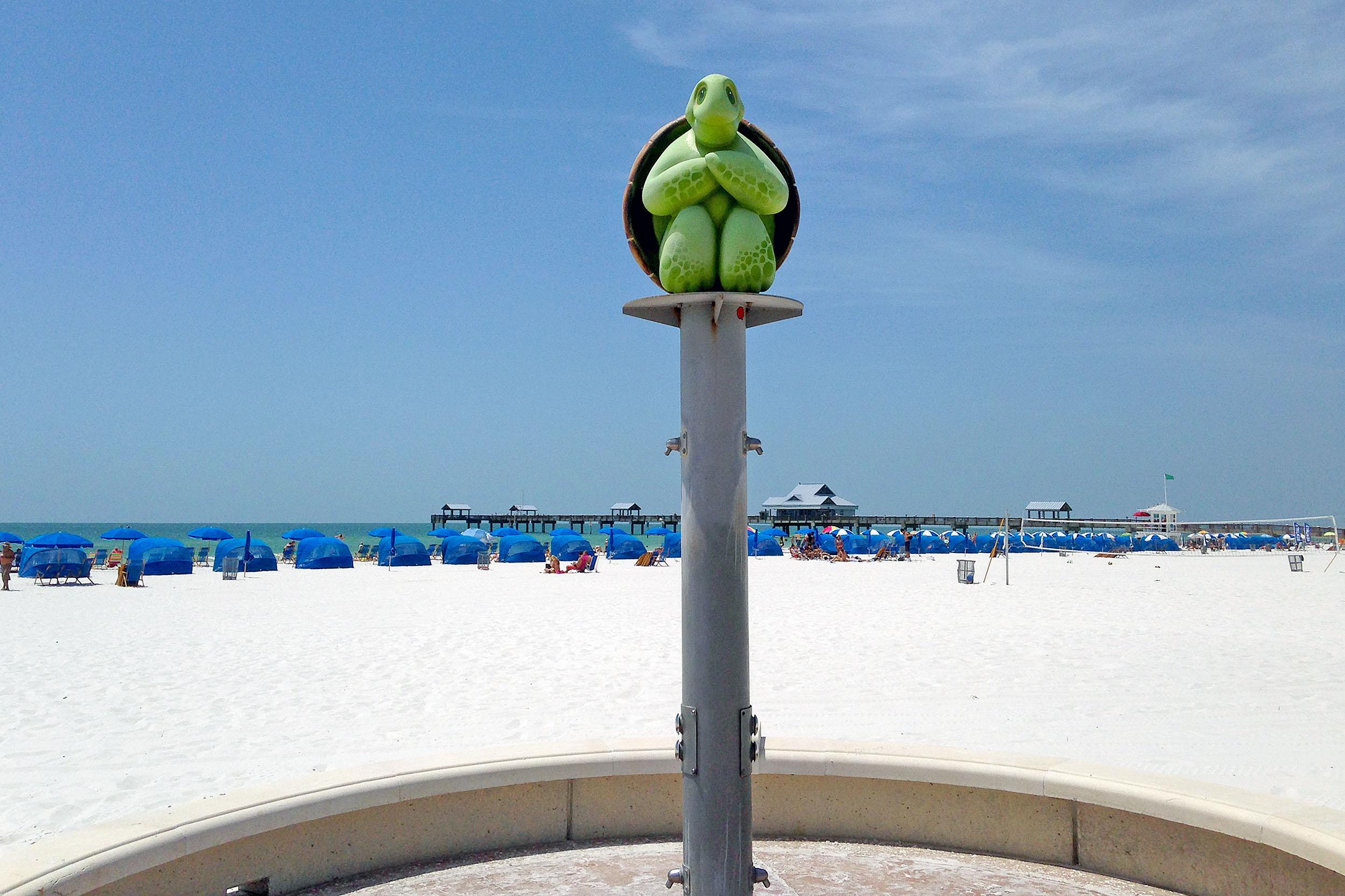 Clearwater Beach Sköldpadda