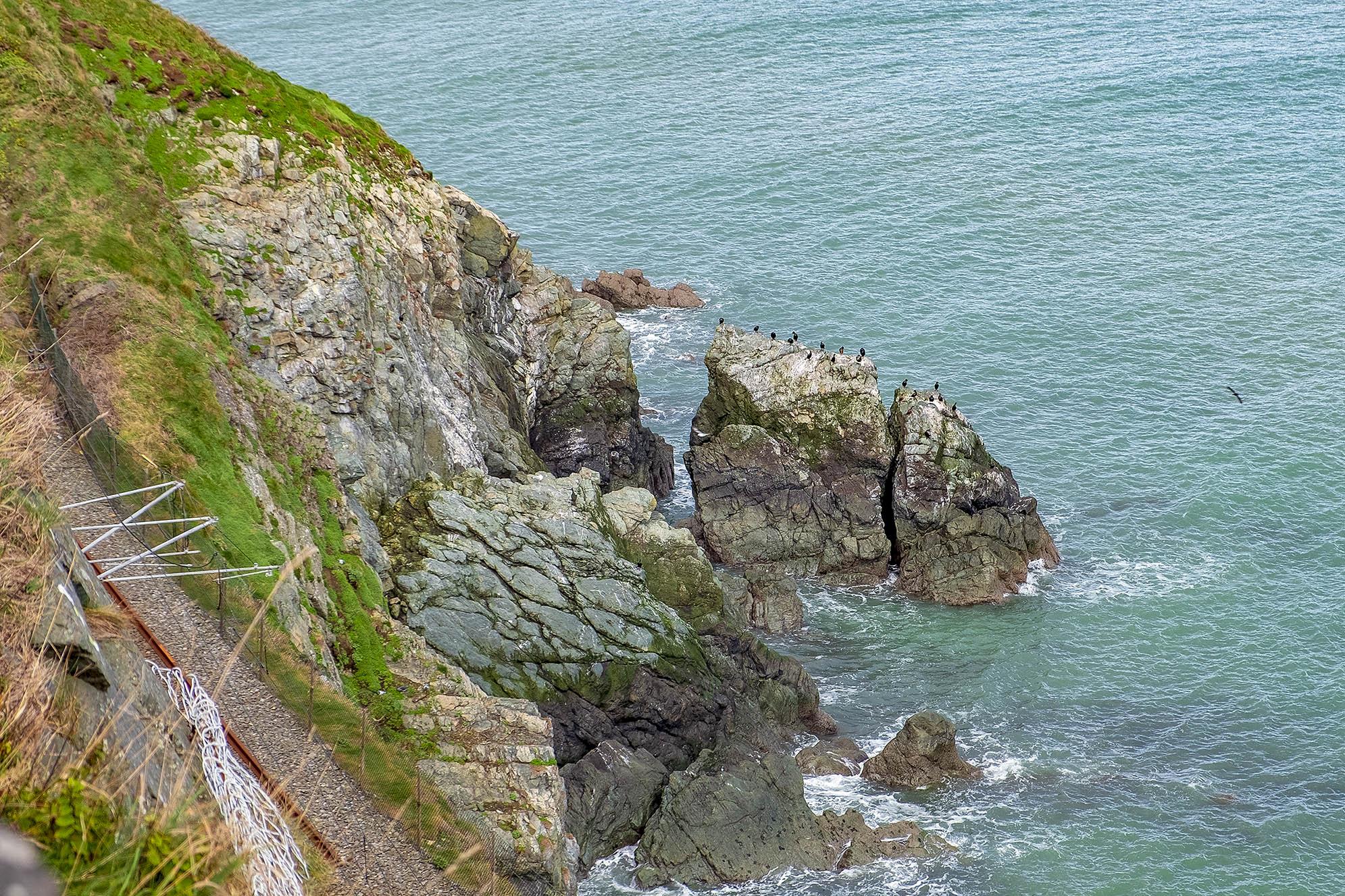 Fåglar på The Cliff Walk