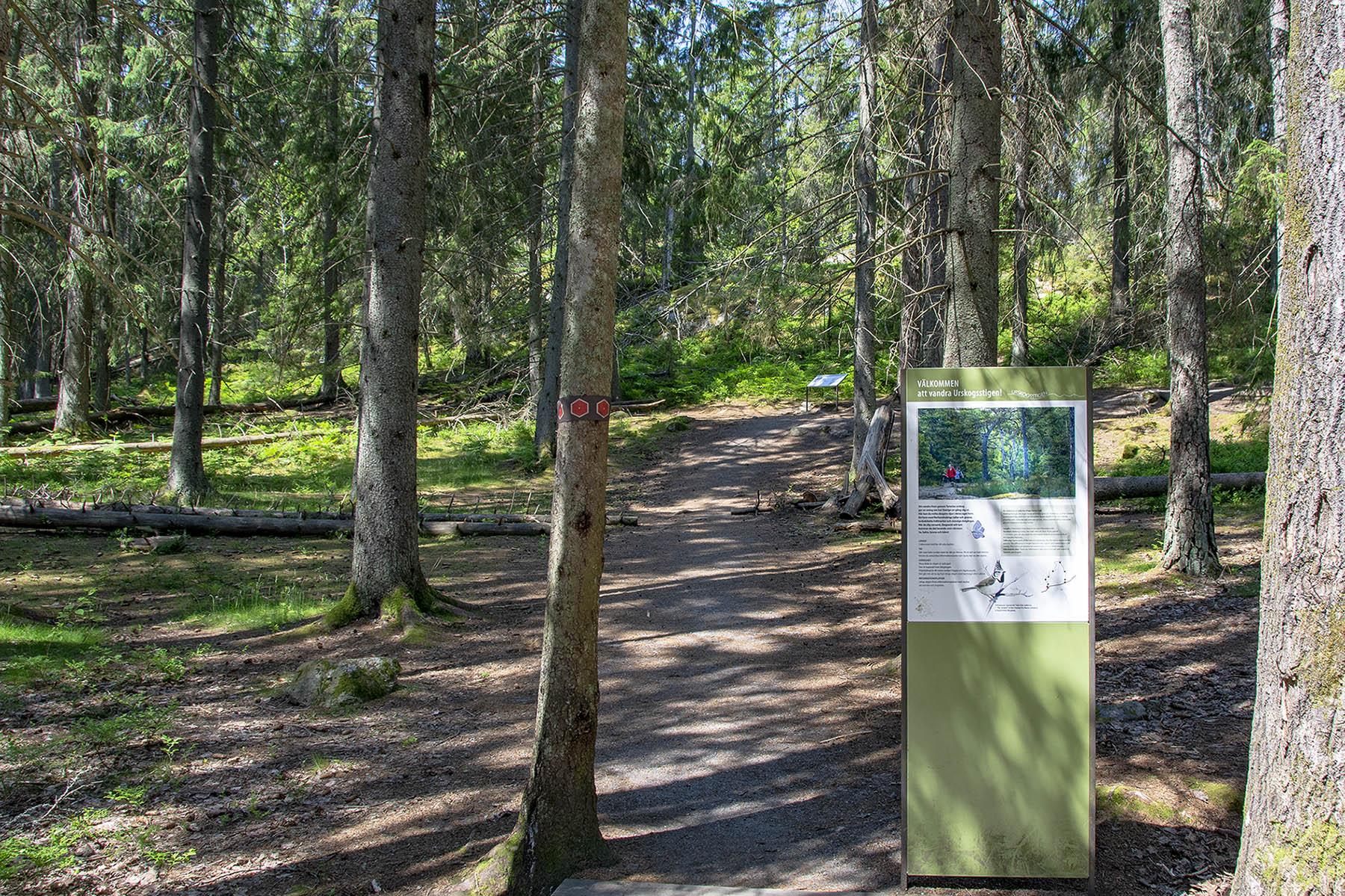Urskogsstigen Tyresta