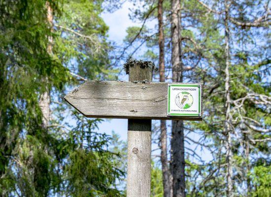 Urskogsstigen Tyresta Nationalpark