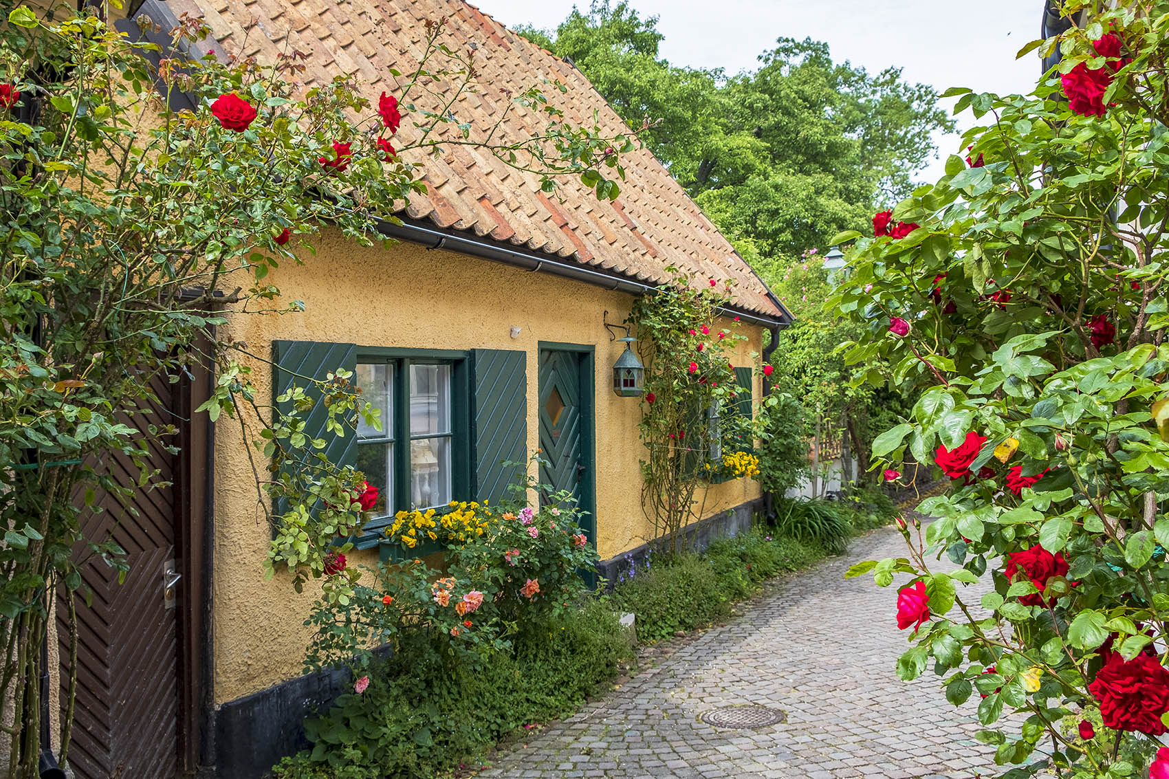 Gult hus med rosor på Fiskargränd
