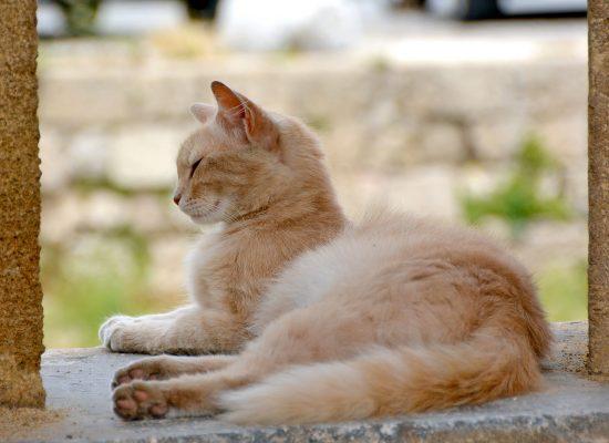 Internationella Kattdagen Rhodos stad katt